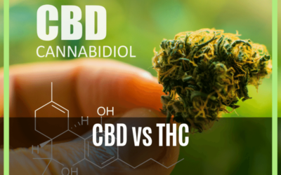 CBD vs THC- What You Need To Know