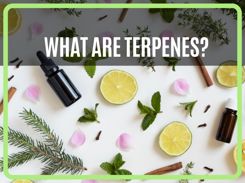 What Are Terpenes?